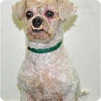 Adopt A Pet :: Dozer - Port Washington, NY