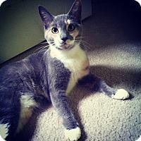 Adopt A Pet :: Precious - Springfield, PA
