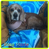 Adopt A Pet :: Rosa Marie - Hollywood, FL