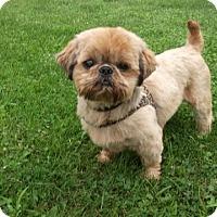 Adopt A Pet :: GEORGIE-pending - Eden Prairie, MN