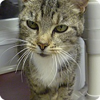 Adopt A Pet :: Moonshadow - Hamburg, NY