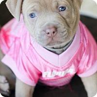 Adopt A Pet :: Izzie - Miami, FL