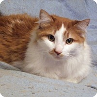 Adopt A Pet :: Jay - Toronto, ON