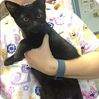 Adopt A Pet :: Frank Sinatra - Richboro, PA