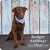Adopt A Pet :: RODGER - Conroe, TX