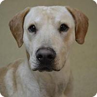 Adopt A Pet :: Charles - Miami, FL