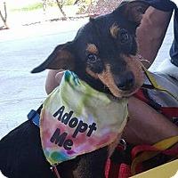Adopt A Pet :: Danny - Ft. Lauderdale, FL