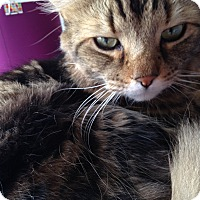 Adopt A Pet :: Spike - Toronto, ON