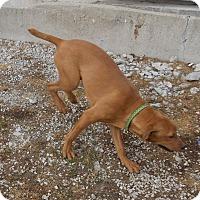 Adopt A Pet :: Happy - Lewisburg, TN