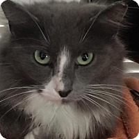 Adopt A Pet :: zz 'Blue' courtesy post - Cincinnati, OH