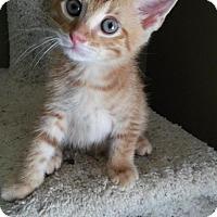 Adopt A Pet :: Rudy 160692 - Atlanta, GA