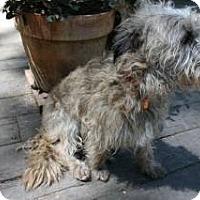 Adopt A Pet :: BILBO BAGGINS - Forest Ranch, CA