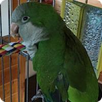 Adopt A Pet :: Eli - Asheville, NC