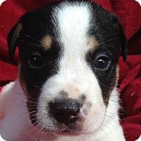 Adopt A Pet :: Kaiden - Boston, MA