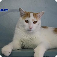 Adopt A Pet :: Bailey - West Des Moines, IA