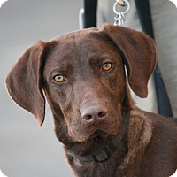 Adopt A Pet :: Connor - Palmdale, CA
