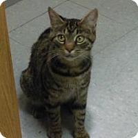 Adopt A Pet :: Starry - Parma, OH