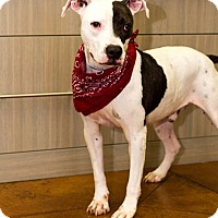 Adopt A Pet :: Deuce - Baton Rouge, LA