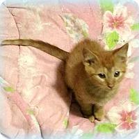 Adopt A Pet :: Nacho - Millersville, MD