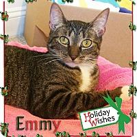Adopt A Pet :: Emmy - East Brunswick, NJ