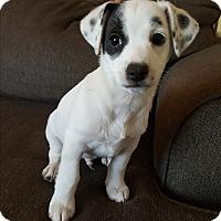 Adopt A Pet :: Patch - Rancho Cucamonga, CA
