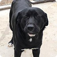 Adopt A Pet :: Dublin Dan - Harmony, Glocester, RI
