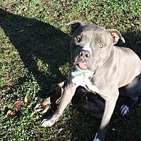Adopt A Pet :: Lumpy - Sacramento, CA