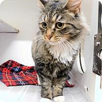 Adopt A Pet :: Grace- 101401j - Tupelo, MS