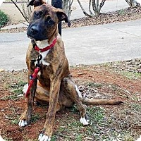 Adopt A Pet :: Luke - Allen town, PA