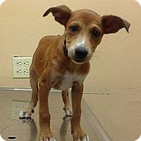 Adopt A Pet :: Debbie - Brooklyn, NY