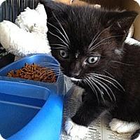 Adopt A Pet :: Jasper - Island Park, NY