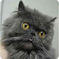 Adopt A Pet :: Cato - Davis, CA