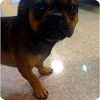 Adopt A Pet :: Jax - Fowler, CA