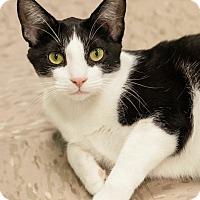Adopt A Pet :: Radcliffe - Byron Center, MI