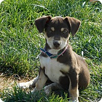 Adopt A Pet :: Babe - Meridian, ID