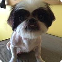 Adopt A Pet :: Marlena - Gainesville, FL