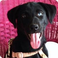 Adopt A Pet :: Azulu (Zuzu) - Allentown, PA