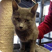 Adopt A Pet :: Caberet - Caistor Centre, ON