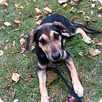 Adopt A Pet :: Bristol in CT - Manchester, CT