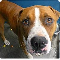 Adopt A Pet :: Chico - Springdale, AR