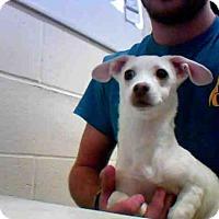 Adopt A Pet :: A250752 - Conroe, TX