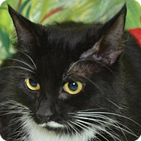 Adopt A Pet :: Dora - Englewood, FL