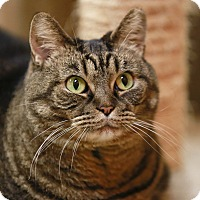 Adopt A Pet :: Charlotte - Kettering, OH