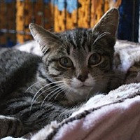 Adopt A Pet :: Hickory - New City, NY