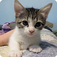 Adopt A Pet :: Kat - Ellicott City, MD