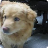 Adopt A Pet :: Blondie - Lincolnton, NC