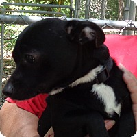 Adopt A Pet :: Hooch - Crump, TN