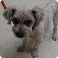 Adopt A Pet :: Spyros - Gulfport, MS