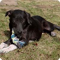 Adopt A Pet :: Hannah - Huntsville, AL