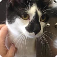 Adopt A Pet :: Ava - East Brunswick, NJ